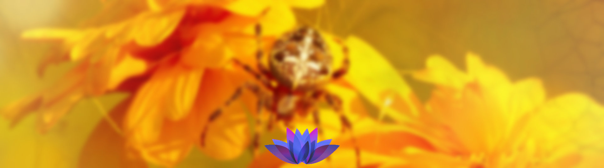 Phobias can be managed with hypnotherapy help - manage your reactions.